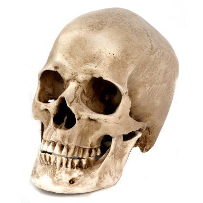 Highly Realistic Replica Human Skull: Yorick!